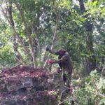 oczyszczanie ruin pomnika Gozdowice 2017